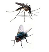 Mosche e Zanzare