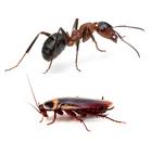 Formiche e Scarafaggi